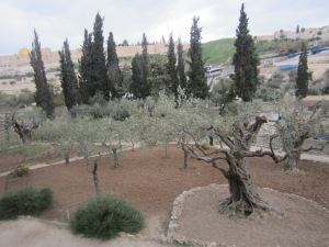 Private area of the Garden of Gethsemane, Jerusalem