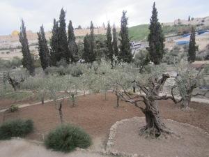 Private area of the Garden of Gethsemane, Jerusalem