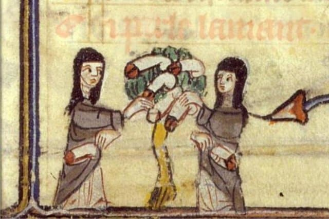 penis-tree-marginalia-to-roman-de-la-rose-14th-century